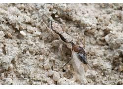 蜘蛛,动物387236