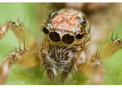 蜘蛛,动物387237