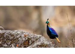 岩,华美,背景虚化,模糊,动物,性质,鸟类560738