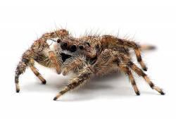 蜘蛛,动物387239