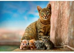 猫,景深,绿眼睛,蓝眼睛,眼睛,肖像,动物569836