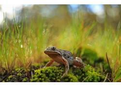 动物,青蛙,两栖动物,植物438339