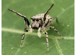 蜘蛛,动物387241