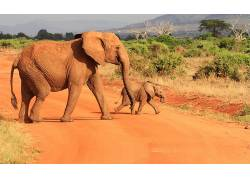 动物,非洲,象,小动物422490