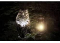 猫,灯笼,动物680347
