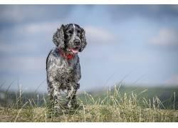 狗,动物558119