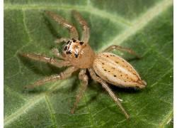 蜘蛛,动物387243