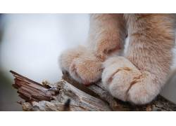猫,爪子,特写,宏,景深,动物,性质537545