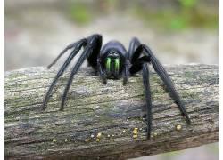 蜘蛛,动物387244
