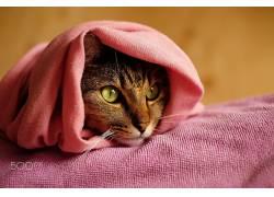 猫,猫的,动物,500px的452952