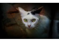 猫,白色,动物572228