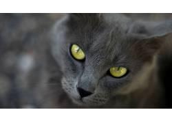 猫,眼睛,动物608261
