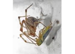 蜘蛛,昆虫,动物387258