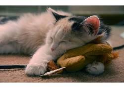 猫,睡眠,动物,闭着眼睛398158