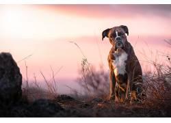 狗,动物581280