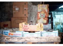 猫,纸箱,动物413421