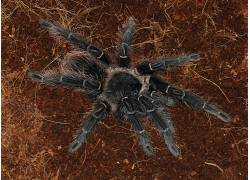 蜘蛛,狼蛛,动物387255