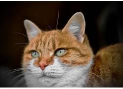 猫,绿眼睛,动物645926