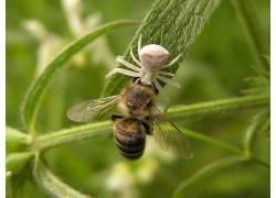 蜘蛛,蜜蜂,昆虫,动物387280