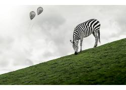 斑马,动物,气球559280