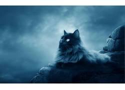 猫,艺术品,天空,动物398256