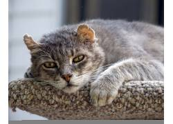 旧,猫,动物579155