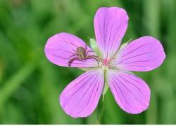 蜜蜂,昆虫,飞,动物,蜘蛛,花卉387282