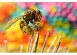 昆虫,动物,宏,黄蜂585029