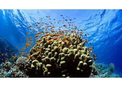 动物,鱼,水下436807