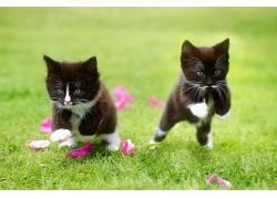 猫,草,小猫,跳跃,动物563770