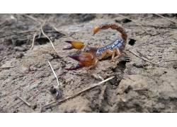 蝎子,动物,性质,爬行动物,火鸡,阿达纳402859