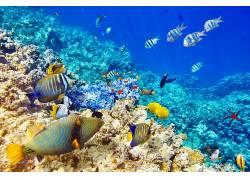动物,鱼,水下438351