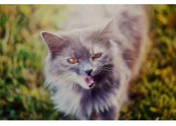 猫,草,过滤,动物386145