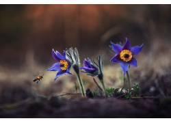 昆虫,花卉,植物,动物,蜜蜂637391