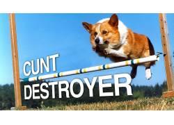 幽默,柯基犬,狗,动物,跳跃,活版印刷130306