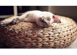 延伸出,猫,动物571554