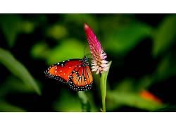 蝴蝶,动物,花卉,植物379066
