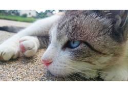 猫,蓝眼睛,性质,动物,暹罗猫,小猫667998