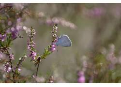 昆虫,鳞翅类,动物422411