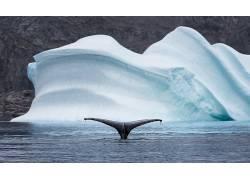 动物,鲸,北极,海,冰山,性质498105