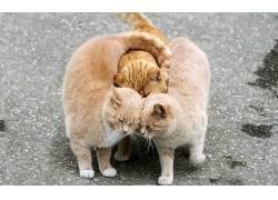 猫,街,爱,动物449424