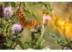 昆虫,鳞翅类,动物422413
