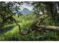 性质,丛林,植物,动物,蜥蜴,爬行动物,壁虎,邮票500430
