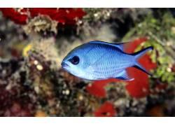 景深,鱼,动物397296