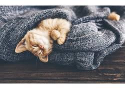 猫,闭着眼睛,动物,小猫,跳蚤626880