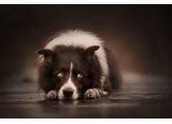 狗,动物624551