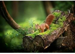 木,苔藓,绿色,植物,性质,松鼠,动物599247