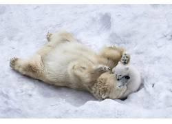 性质,动物,冬季,北极熊,野生动物,小动物,雪,播放632868