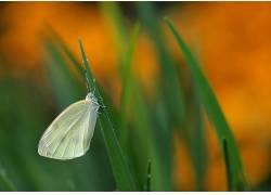动物,鳞翅类,昆虫,宏,植物392802