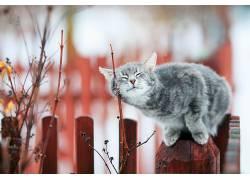 猫,闭着眼睛,动物620474